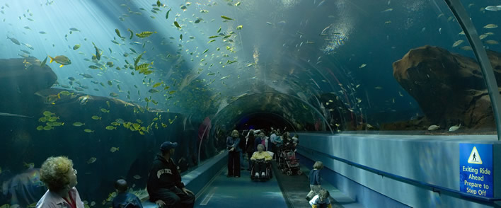 Top 5 des plus grands aquariums au monde